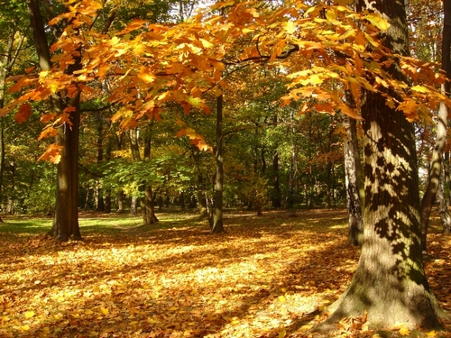 18078  jesien kopia Jak uniknąć jesiennych dolegliwości?